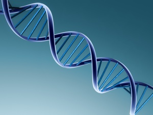 dna-double-helix2.jpg
