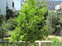 Read more: Day 3 - 23.06.2011 - Prvo giftanje